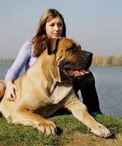 дрессировка большой собаки