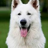 Выбираем сторожевую собаку