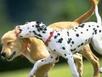 Собаки - братья наши меньшие