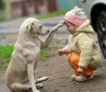 Приобретение собаки - большая ответственность