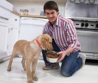 Как кормление собак влияет на их жизненную активность: основные правила кормления