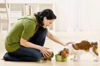 Разрушаем мифы о здоровье собак