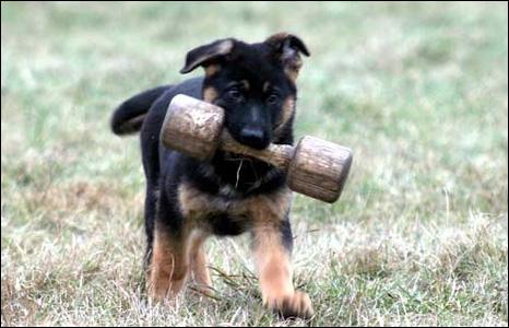 Дрессировка и воспитание щенков