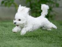 Самое главное в воспитании собак