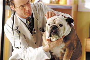 Почему так важны регулярные осмотры собаки?