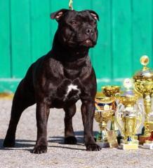 Собаки, их питание и тренировки