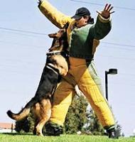 Собака – друг и помощник человека