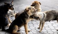 Собака – друг человека