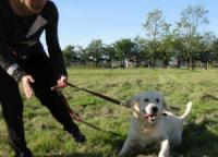 Особенности дрессировки собак