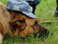 Вопросы обучения служебных собак