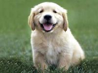 Правила воспитания собаки и ухода за ней
