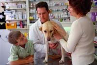 Как следить за здоровьем собаки