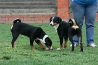Воспитание и уход за собаками