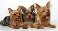 Собаки – наши друзья