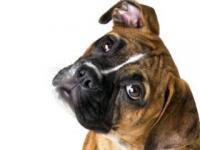 Чему мы можем научиться у собак