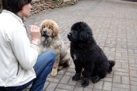 Главные аспекты содержания собаки. Щенок в вашем доме