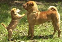 Кто виноват в агрессивном поведении собаки?