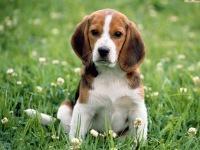 Как правильно воспитывать собаку