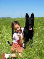 Важность работы кинолога для воспитания вашей собаки