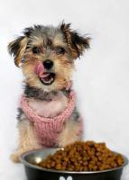 Чем кормить собаку