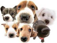 Какая собака создана для Вас?
