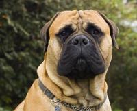 Собака для души и охраны дома