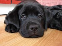 Самое важное о воспитании собак