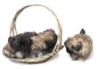 Питомники для разведения собак