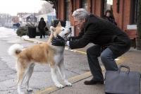 Собака-лучший друг человека.