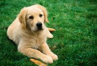 Правильный уход за собаками