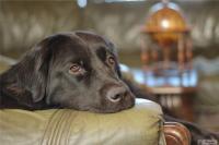 Болезни желудка у собак