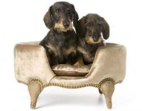 Домашние питомцы - собаки