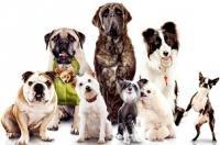 Наука о повадках и породах собак- кинология