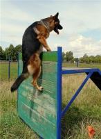 Особенности профессиональной дрессуры и ухода за собаками
