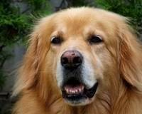 Немного о собаках и кинологии