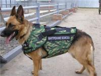 Сферы деятельности, в которых заняты собаки