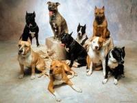 Немного о кинологии и собаках