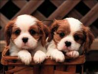 О кинологии и собаках