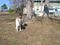 Собака на охоте – друг и соратник