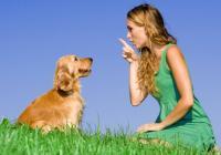 О собачьем образовании