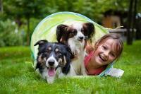 Правильный подход к воспитанию собак